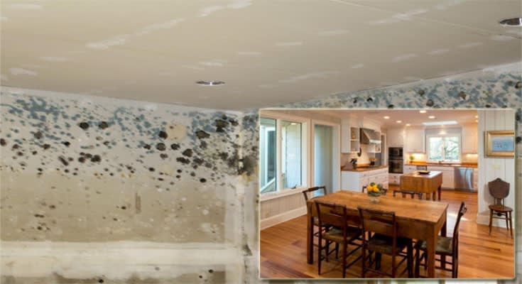 Safeguard Your Home From Mold