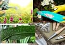 How To Create And Maintain Your Backyard Garden