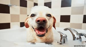Can I Wash My Dog If He's on Frontline Or K9 Advantix?
