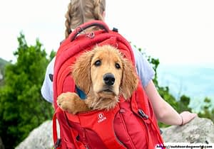 Comfort for Your Dog in a Pet Carrier