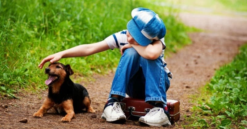 Pro-tips for facing grief & trauma: How to cope with pet loss?