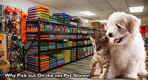 Why Pick out On the net Pet Stores?