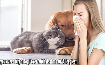 Are you currently a Dog Lover With Asthma Or Allergies?
