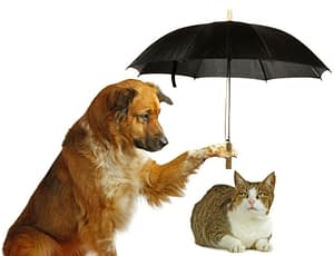 What Is Pet Insurance And Why You Should Invest In One?