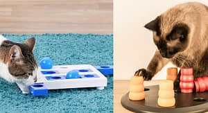 Cat Food Puzzles Is Easy to Make, Fun, and Effective For Your Cat