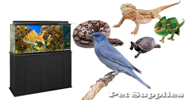 Bird, Fish and Reptile Supplies Fundamentals