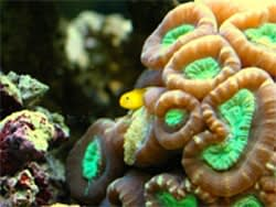 All You Need To Know About Keeping Coral In Your Aquarium