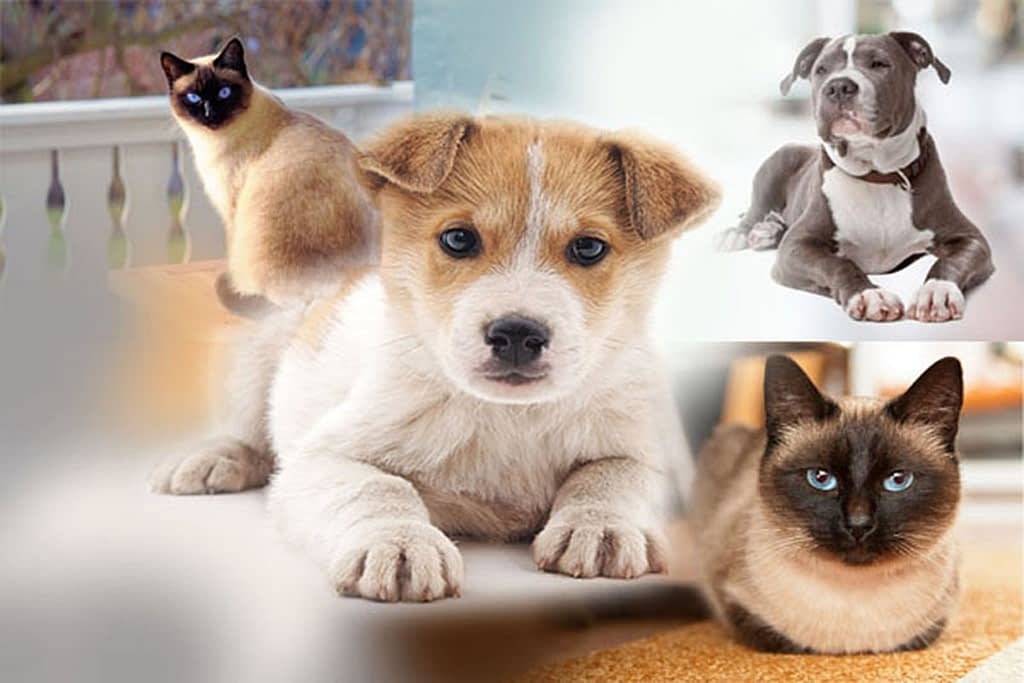 Why Purchase Insurance for Your Pet?