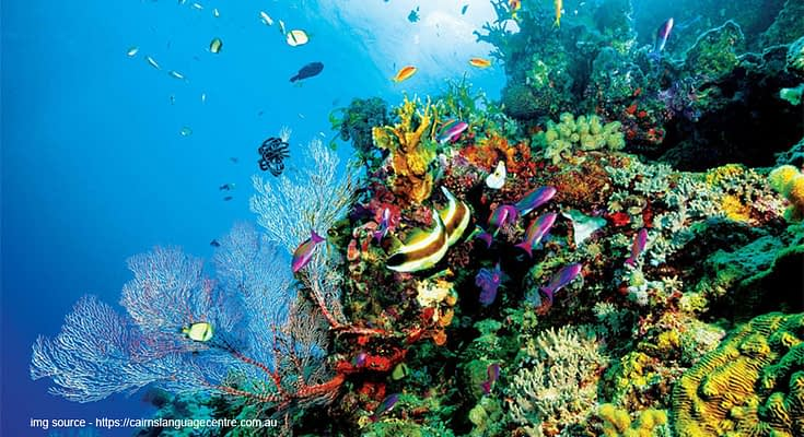 The Most Beautiful Coral Reefs in the World
