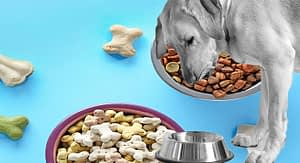More People Are Shopping for Dog Food Online Than Ever Before