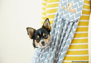 Some Essential Facts Regarding Pet Carriers