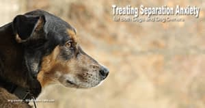 Tips on Treating Separation Anxiety for Both Dogs and Dog Owners