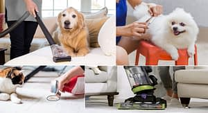 Tips to Keeping the House Clean With Indoor Pets