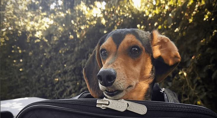 Things You Should Know About Flying With Your Pet