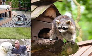 Tips on How to Care For Your Exotic Pets As Pets
