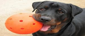 Best Indestructible Toys for your Dogs