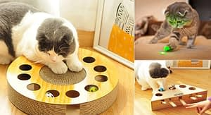 How to Choose Interactive Cat Toys For Your Cat